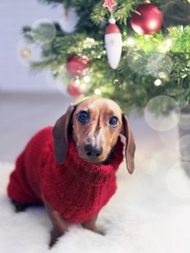 Dog underneath Christmas tree