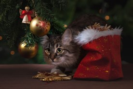 Cat hiding underneath Christmas tree